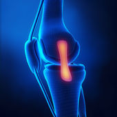 Medial ligament knee anatomy — Stock Photo