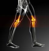 Human knee scan — Stock Photo