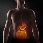 Focused on man digestive system — Stockfoto
