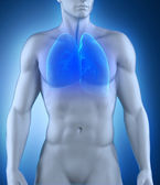 Anatomie der atmungsorgane — Stockfoto