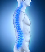 Male spine anatomy lateral view — Stock Photo