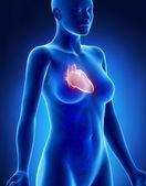 Vrouwelijke hart x-ray zijdelingse weergave — Stockfoto