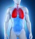 Male respiratory system anatomy — Stock Photo
