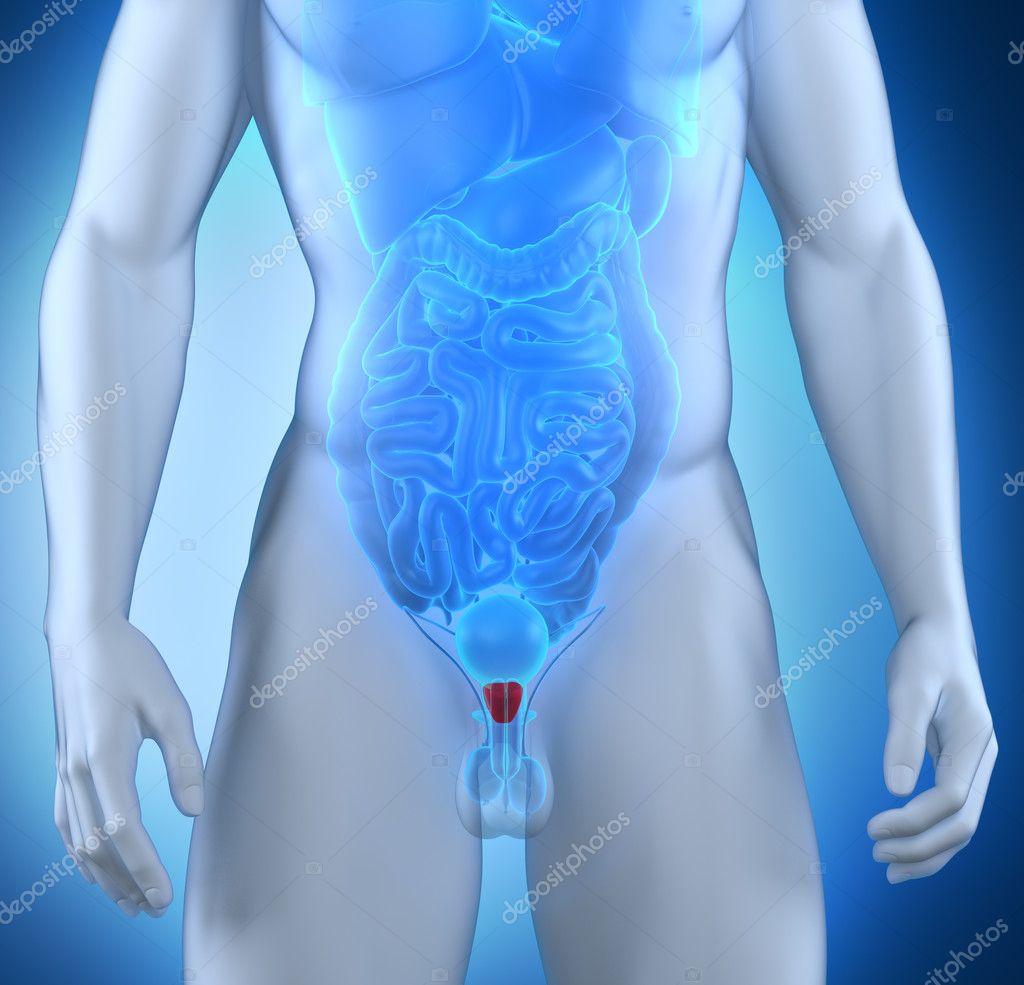 Фото мужские и женские половые органы