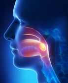 Tonsils lateral view — Stock Photo