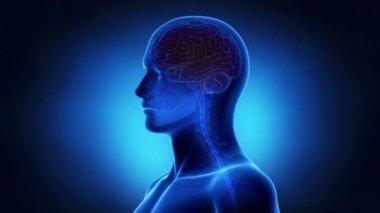 Neuron impulses into brain — Stock Video