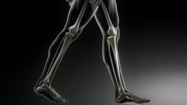 Bottom parts skeleton medical scan — Stock Video