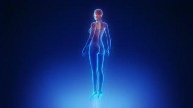 Female body scan — Stock Video