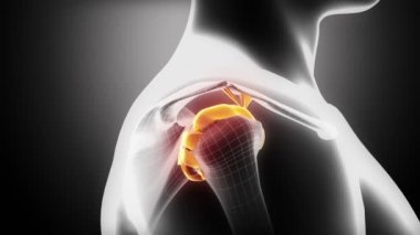 Shoulder ligaments anatomy — Stock Video
