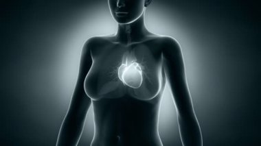 Woman heart x-ray — Vídeo Stock