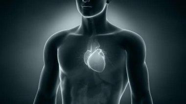 Human xray heart anatomy — Stock Video