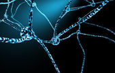 Nerve Cells And Neuronal Network — Stock Photo