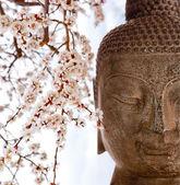Buddha and cherry blossoms — Stock Photo