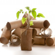 Empty toilet paper roll made into a planter — Stock Photo