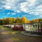 Autumn — Stock Photo #15446625