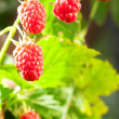 Raspberry — Stock Photo #27075381
