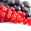 Fresh berries isolated — Foto de Stock