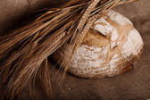 Bread with ears — Stock Photo