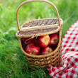 Basket with apples outdoors on grass. — Stock Photo