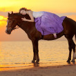 Beautiful woman riding a horse at sunset on the beach. Young bea — Stock Photo #46338977