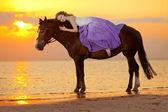 Bir binicilik gün batımında sahilde güzel bir kadın. Genç bea — Stok fotoğraf