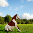A beautiful horse in the field is sitting on the grass. Horse si — Foto de Stock   #46350819