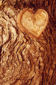 Forest brown wooden background. Texture forest wooden tree bark  — Stock Photo