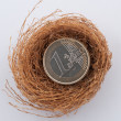 Stock Photo: Euro coins in nest