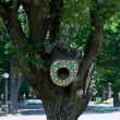 Tree hollow — Stockfoto #25395509