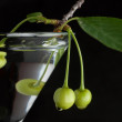 Unripe green cherry in martini glass on black — Stock Photo