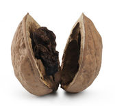 Rotten Nut. Isolated with clipping path — Stock fotografie