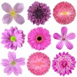 Collection of Various Pink, Purple, Red Flowers Isolated — Stock Photo #13157815