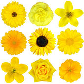 Collection of Yellow Flowers Isolated on White — Stock Photo