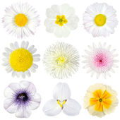 Various Collection of White Flowers Isolated on White — Stock Photo