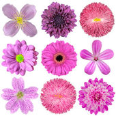 Collection of Various Pink, Purple, Red Flowers Isolated — Stock Photo