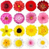 Grande selezione di vari fiori isolato su bianco — Foto Stock