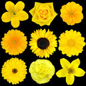 Collection of Nine Yellow Flowers Isolated on Black — Stock Photo