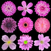 Various Pink, Purple, Red Flowers Isolated on Black Background — Stock Photo