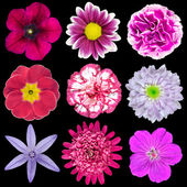 Nine Various Pink, Purple, Red Flowers Isolated on Black — Stock Photo