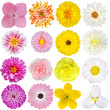 Selection of  Pink, Orange, Yellow and White Flowers Isolated on White - Stock Photo
