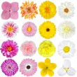 Selection of Pink, Orange, Yellow and White Flowers Isolated on White — Stock Photo #13671152