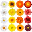 Various White, Yellow, Orange and Red Flowers Isolated on White - Stock Photo