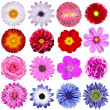 Selection of Various Flowers Isolated on White Background - Stock Photo