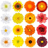 Various White, Yellow, Orange and Red Flowers Isolated on White — Stock Photo