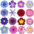 big selection of colorful flowers isolated on white background — Stock Photo