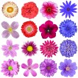 big selection of colorful flowers isolated on white background — Stock Photo #13835296