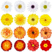 Big Selection of Various Flowers Isolated on White Background — 图库照片