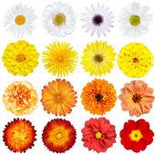 孤立在白色背景上的各种花草的大选择 — 图库照片