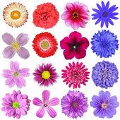 Grande selezione di fiori colorati, isolato su sfondo bianco — Foto Stock