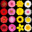 Various White, Yellow, Pink and Red Flowers Isolated on Black — Stock Photo